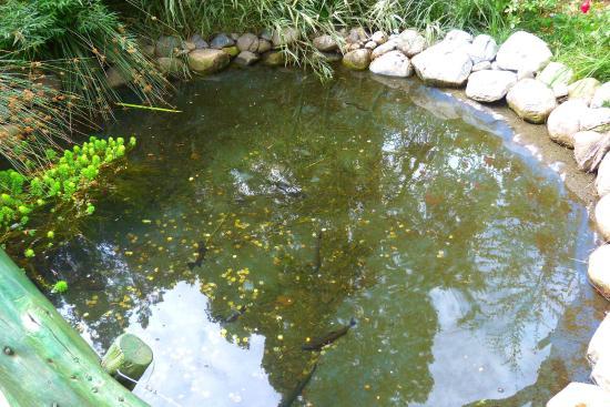 Foto de colonia suiza san carlos de bariloche estanque for Como criar truchas en estanques