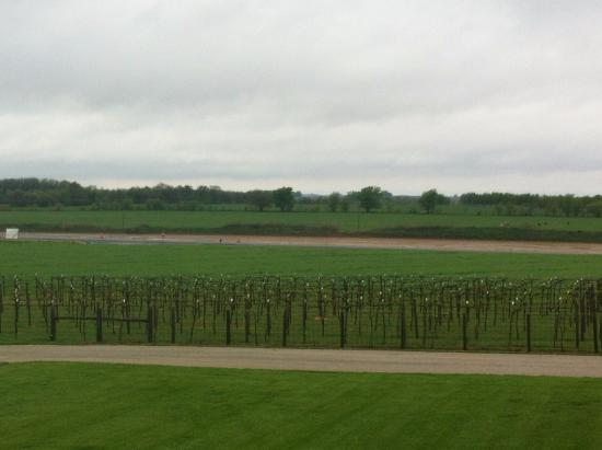 Pana, IL: Vineyard