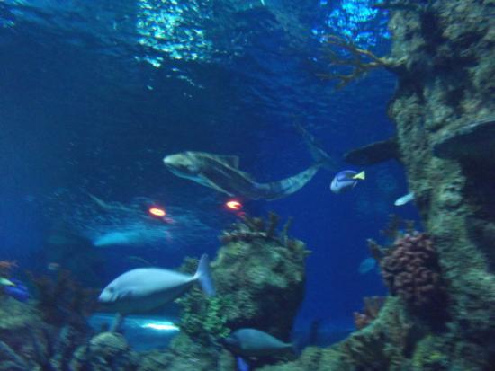 Bugibba Water Park : akwaria