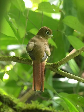 Costa Rica Jade Tours: One of the many beautiful birds we saw.