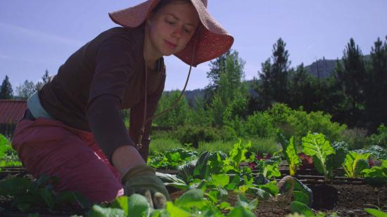 O'Grady's Pantry & Mercantile: Garden fresh.  Ask what is from our organic garden.