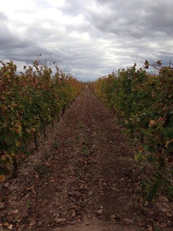 Posada Cavieres Wine Farm: photo4.jpg