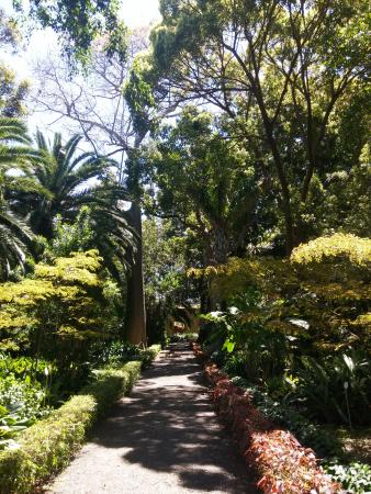 Tenerife picture of botanical gardens jardin botanico puerto de la cruz tripadvisor - Botanical garden puerto de la cruz ...