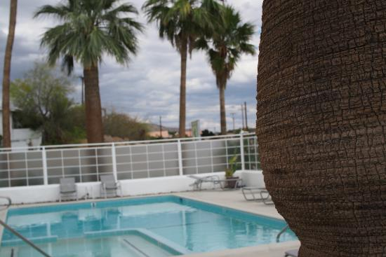 Sagewater Spa: the pool from a palm tree
