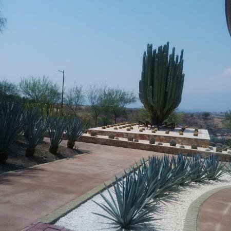 Jard n de cact ceas picture of jardines de mexico for Jardines mexico