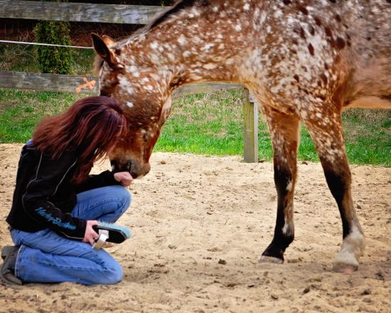 Healing With Horses at Wildrose Horse Farm Megan With Twister