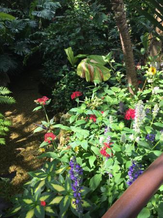 Butterfly Rainforest: Butterfly Exhibit