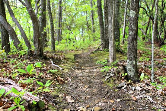 Buffalo Mountain Park: Well marked trails are a huge plus!