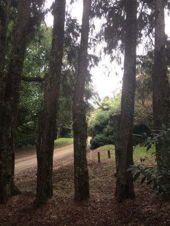 Maungakawa Scenic Reserve: photo2.jpg