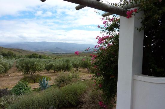 Galenia Estate: View from the cottage/suite (olive grove and lavandel)