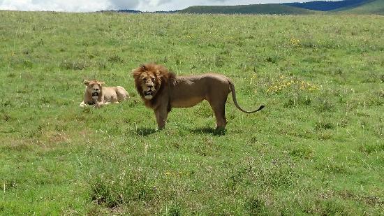 Shemeji Safari Tanzania