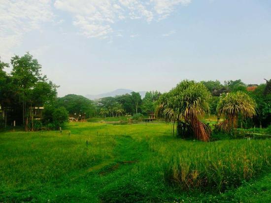 Lana Thai Villa : ラナ タイ ヴィラ