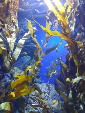 SEA Aquarium fake sea kelp