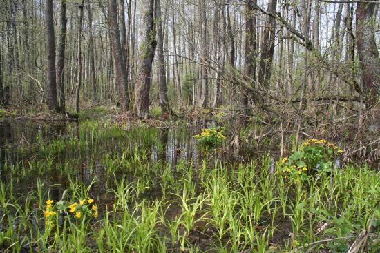 Berezina Biosphere Reserve: Велоэкскурсия по каналу