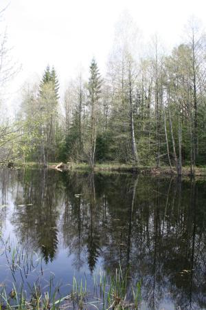 Berezina Biosphere Reserve: Канал