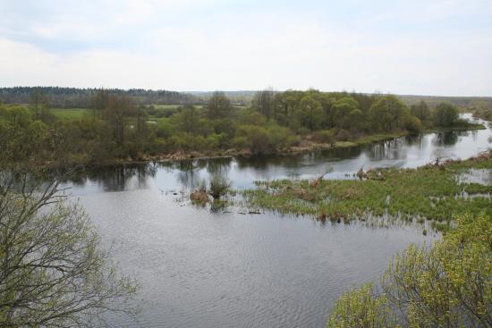 Berezina Biosphere Reserve: Слияние канал и Березины