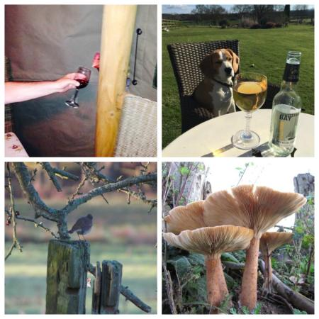 Lowe Farm B&B: Wildlife Fun