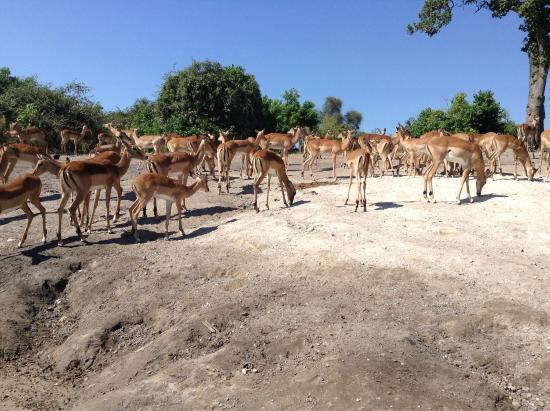 Kasane, Botsuana: photo0.jpg