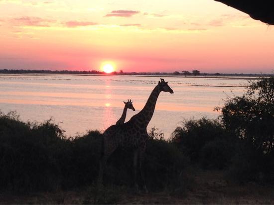 Kasane, Botsuana: photo4.jpg