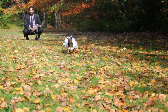 Maplewood Inn & Motel: Our pup enjoying some post-wedding fun in the leaves