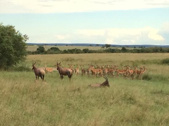Wild Odyssey Safaris - Day Tours
