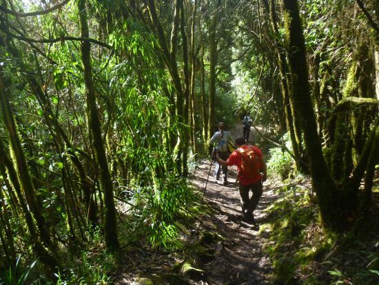 Pasochoa Forest Reserve: Pasochoa trails