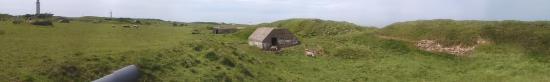 Audinghen, Γαλλία: Les moutons