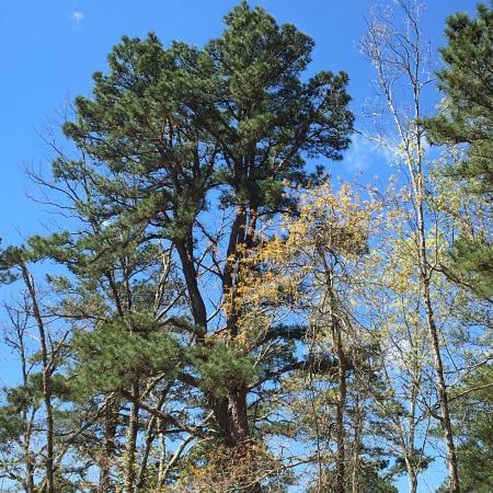 Van Buren, MO: Springtime in the forest