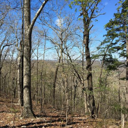 Van Buren, MO: Springtime in the forest