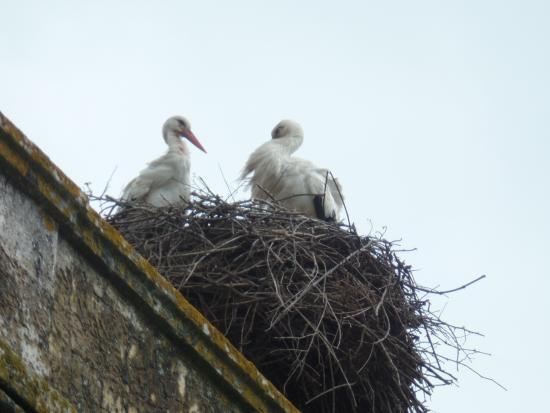 Lisboasightseeing : stork nest near Santarem
