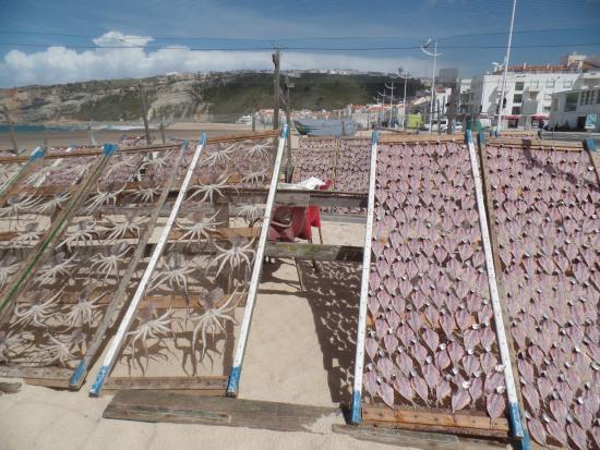 Lisboasightseeing : drying fish at Nazare Beach