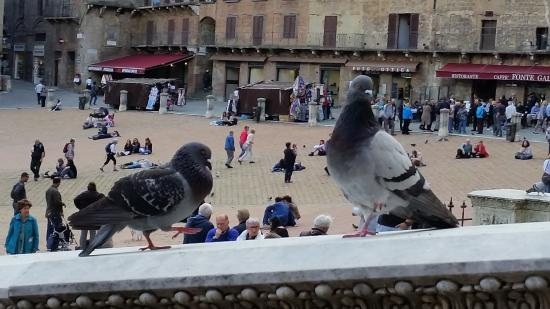 La Piazza del Palio