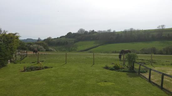 Foto de Dorset