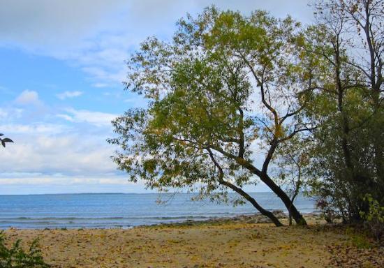 Kelleys Island, OH: Camper's Beach overlooks Lake Erie