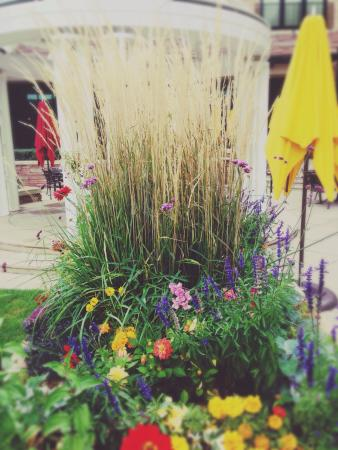 St Julien Hotel and Spa: Fall flowers on the patio. ©Jason Z. Guest, jzguest