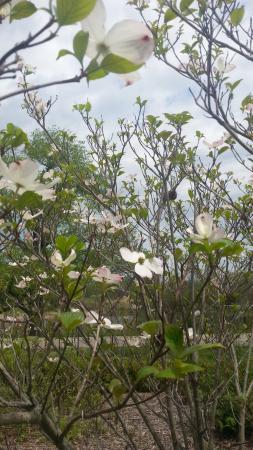 Matthaei Botanical Gardens: Flowers