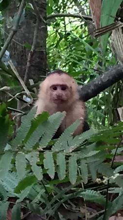 Tours Your Way: Manuel Antonio monkey