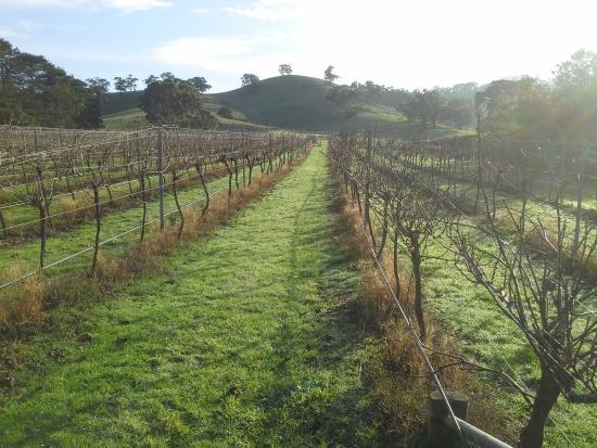 Grampians, Australia: Mountainside Wines