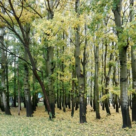 Malargue, Arjantin: Ayer Park