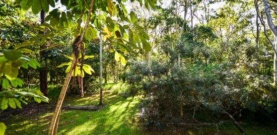 Yungaburra, Australia: Kingfisher view