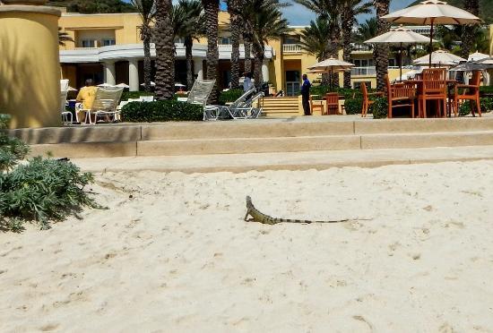 The Westin Dawn Beach Resort & Spa, St. Maarten Photo