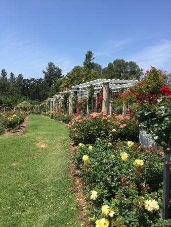 photo0.jpg - Picture of The Huntington Rose Garden Tea Room, San ...