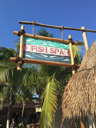 Fish Spa Costa Maya