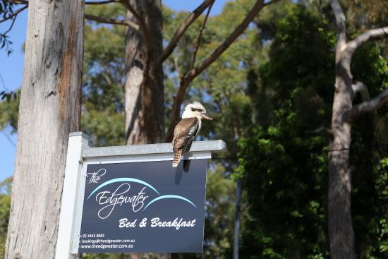 Sanctuary Point, Australien: Friendly greeting