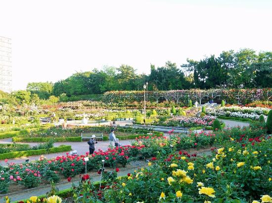 Yatsu Rose Garden