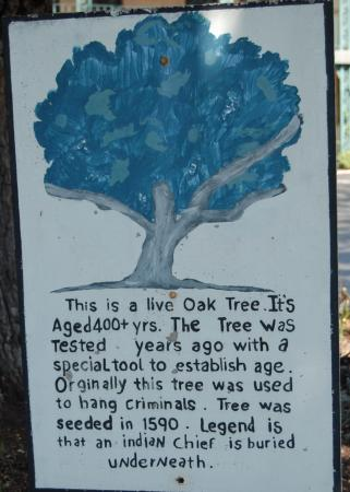 Scottish Inn : Sign by big oak tree in parking lot.