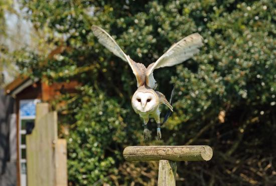 https://media-cdn.tripadvisor.com/media/photo-s/0b/3d/f3/21/owl-flying-display-at.jpg
