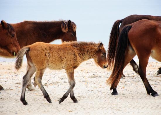 Pecan Tree Inn: Wild Horses