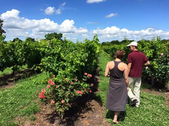 Borravino Wine Tours Uruguay
