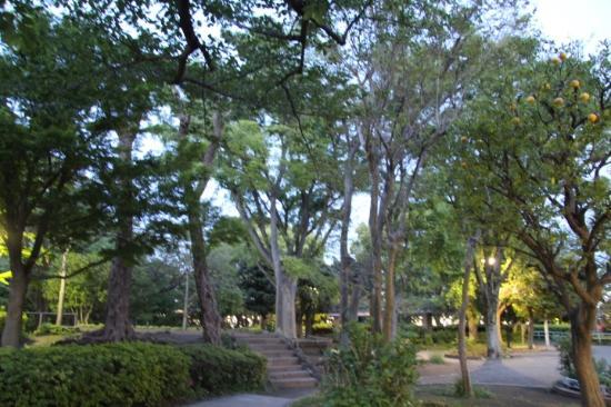 Oi Park